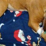 Drogenkurier Hund: Schmuggel in Hundemägen