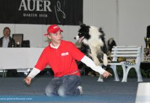 Lukas & Falco: Hundeausstellung Graz 2013 - Sonntag