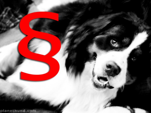 Recht Justiz Hund