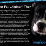 thor fair dog