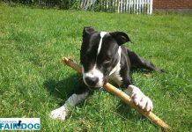 thor fair dog5