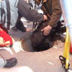 Hund wird von Höhenrettung aus Regenwasserkanal in Graz-Andritz gerettet
