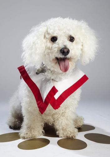"""Hat Bailey eine Chance, das nächste """"Top Dog Model"""" zu werden? © 12 Yard Productions/ITV"""