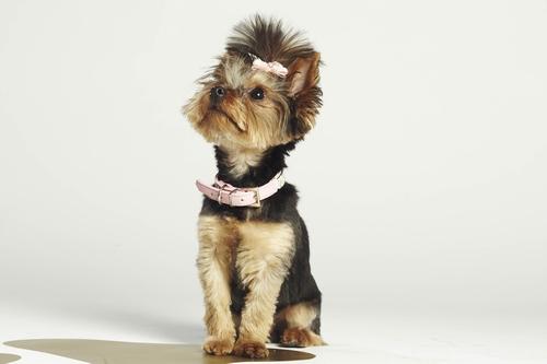 """Kann Boo die """"Top Dog Model?-Jury von sich überzeugen? © 12 Yard Productions/ITV"""