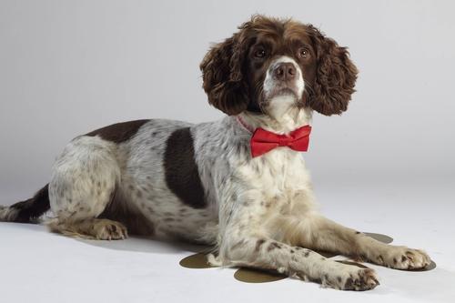 """Kann Hendrix die """"Top Dog Model?-Jury von sich überzeugen? © 12 Yard Productions/ITV"""
