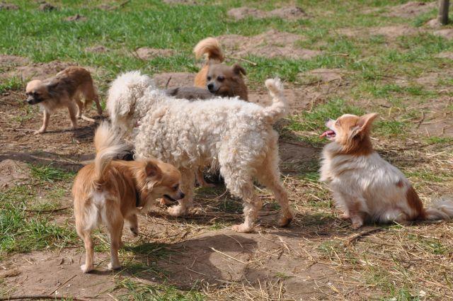 ausgesetzte-hunde-schneverdingen