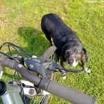 Frühlingsbeginn: Vermehrte Unfälle zwischen Radfahrer und Hunden