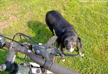 Hund vor Fahrrad