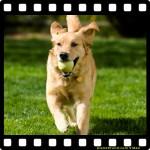 Huntington Beach – Kalifornien: Hunde auf dem Surfbrett für den guten Zweck