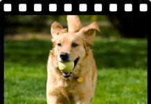Planet Hund Videos