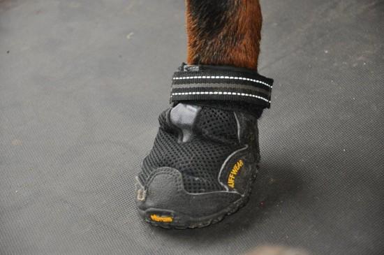 Spezialschuhe mit Klettverschluss für Hunde