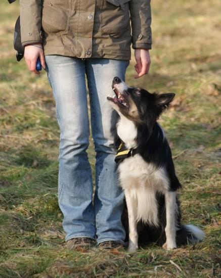 """Muss ein Hund so sein, um """"glücklich"""" zu sein?"""