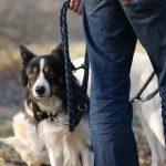 Die moderne Hundeerziehung: Wattebäuschchenwerfer, Wissenschaft, Shitstorms und Moral kritisch hinterfragt