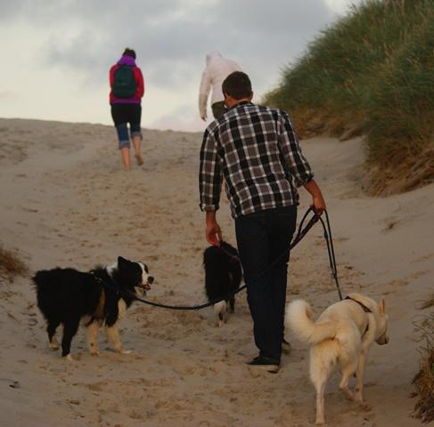Herrlich unaufgeregt: 3 Hunde an der Leine.