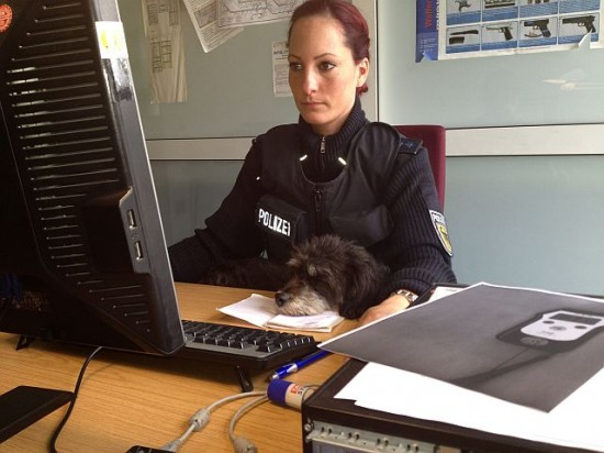 hund-polizei-hamburg