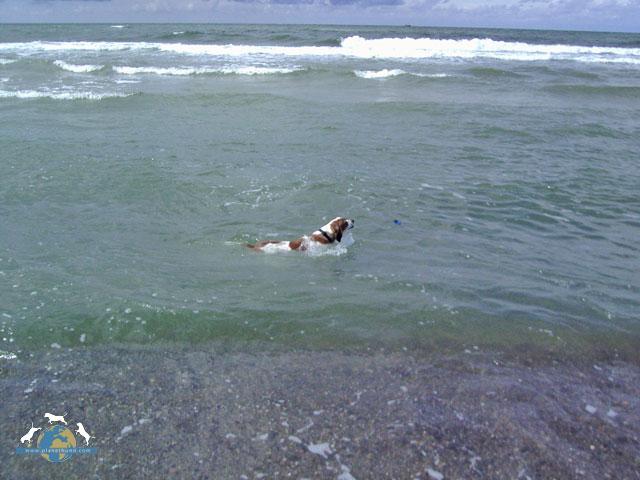 Hund Strand Wasser