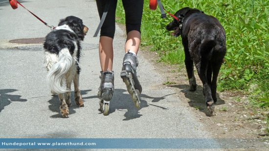 Inline Skating Hund