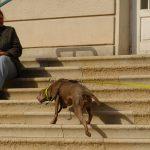 Mantrailing Hund Stiege