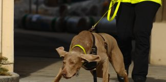 Mantrailing Hund im Einsatz, Fotocredits: moments in time