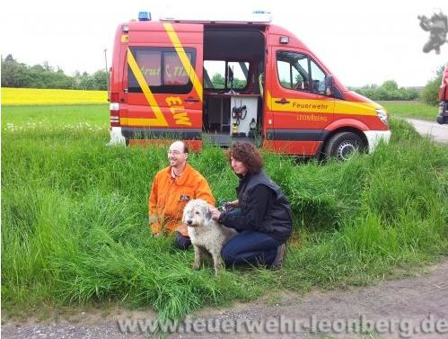 Feuerwehr befreite Hund aus Abwasserrohr