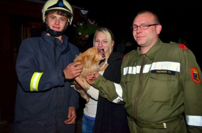 Feuerwehr Ternitz rettet im Zaun feststeckenden Hund