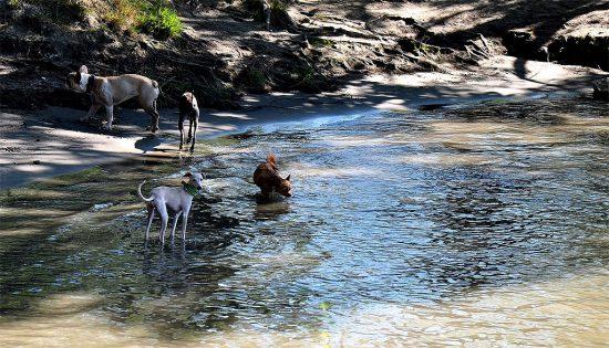Hunde Wien baden