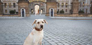 Mein Hund Meine Stadt