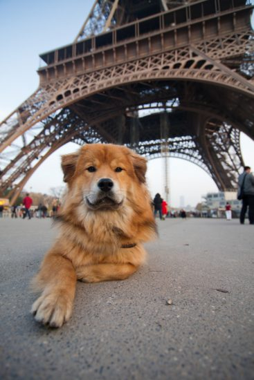 Hund Eiffelturm Paris