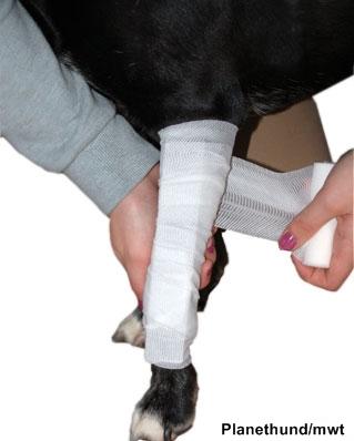 Geschlossene Knochenbrüche bei Hunden: Erste Hilfe | Planet Hund