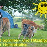 Hund und Hitze: 20 Tipps für heiße Sommer und Hundstage