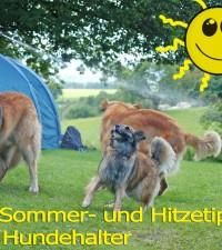 Hund Hitze Sommer Hundehalter