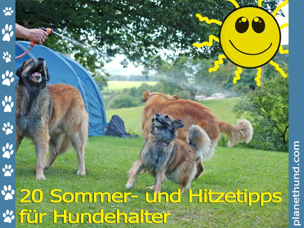 Hund Und Hitze 20 Tipps Für Heiße Sommer Und Hundstage Planet Hund