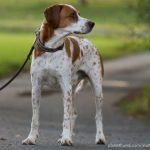 Neues Hundegesetz: Leinenzwang in ganz Berlin