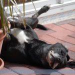 Hitzeschlag – Erste Hilfe für Hunde