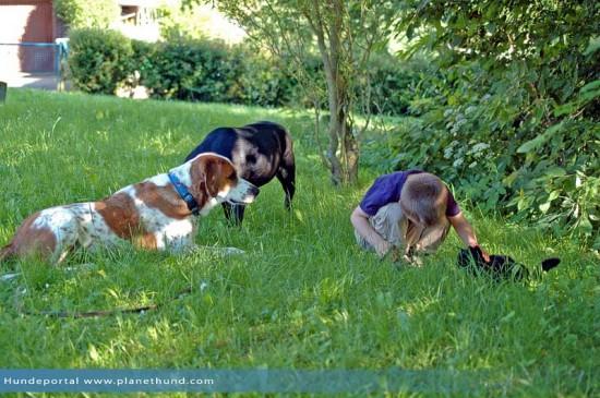 Hunde Park Schatten