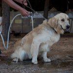 Hundestrand Italien Jesolo
