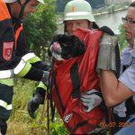 Feuerwehreinsatz: Pekinese bei Kloster Weltenburg gerettet