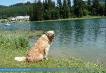 Teichalm Hund Ausflug Teichalmsee