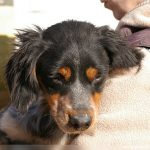 Planethund_0190