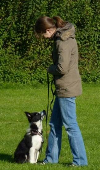 Border Collie in der Hundeschule