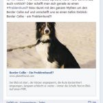 Border Collie Posting Facebook