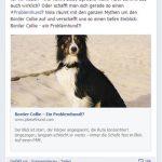 Border Collie Posting Facebook