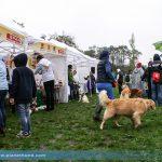 Grazer Hundespaziergang Fotos mit Hundewasserrettung-Vorführung