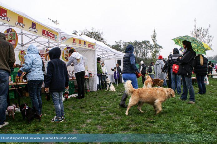 Grazer Hundespaziergang Auwiesen