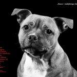 Listenhunde – Die Unsinnigkeit von Rassenlisten