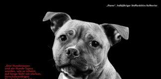 Listehunde Rassenliste Hunde