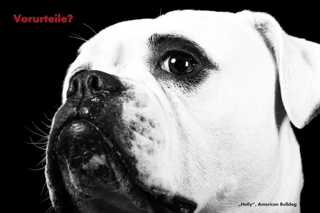 Hund Vorurteil Rasseliste