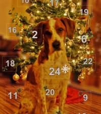 Adventskalender Hunde