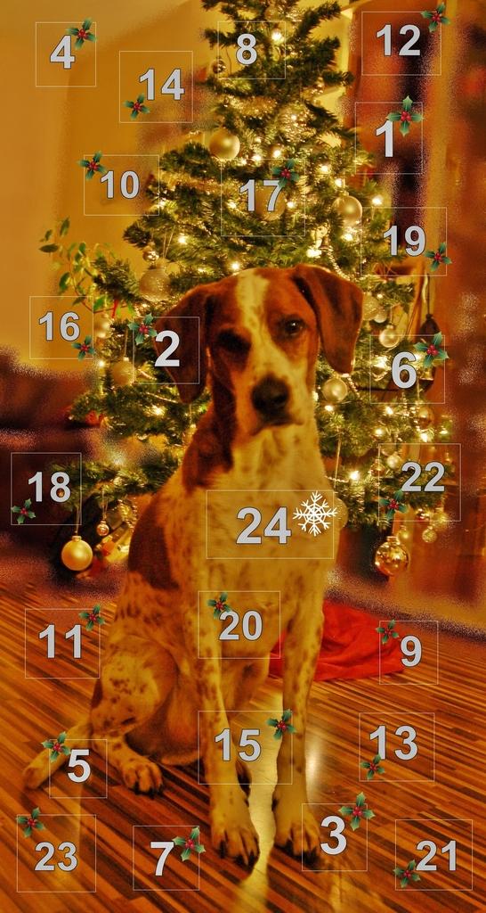 Weihnachtskalender Für Hunde.Adventskalender Für Hunde Hundezubehör Planet Hund