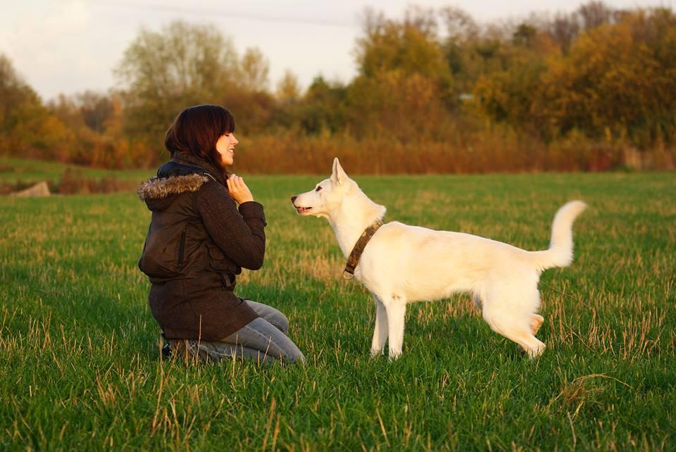 Weißer Hund mit Hundehalterin grüne Wiese